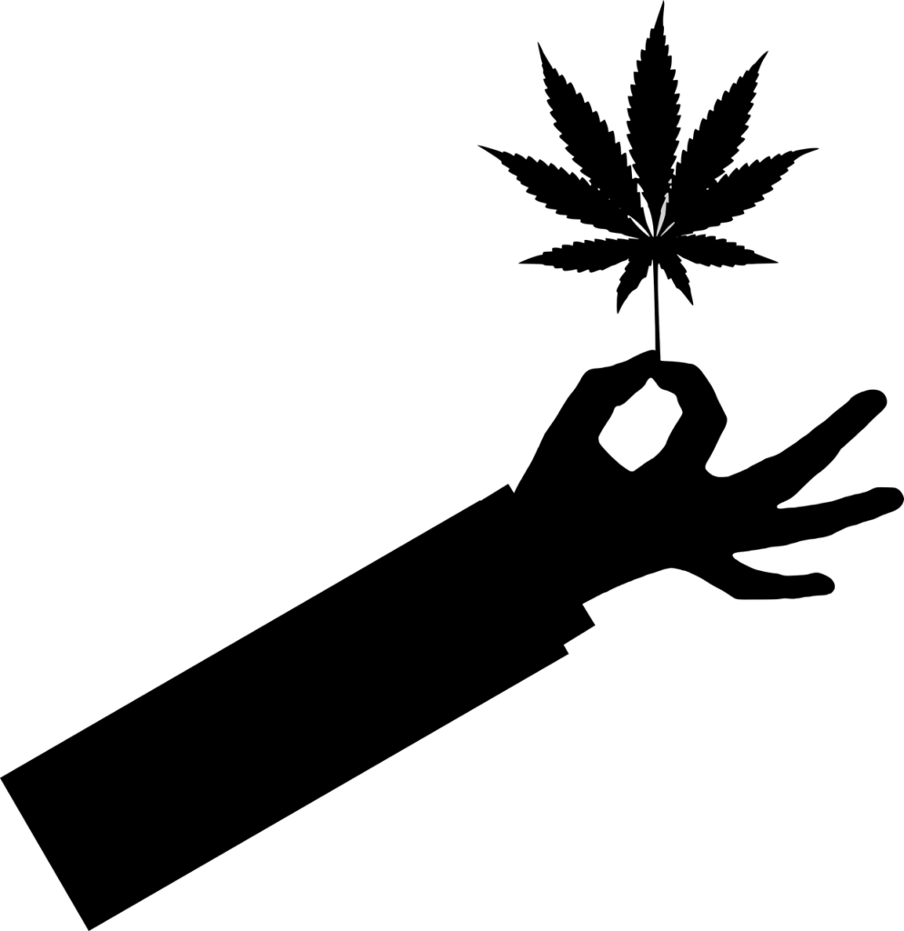liśc cannabis - grafika